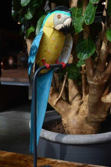 Papegaai Pure wood