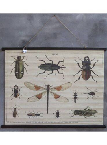 Fotokaart met insecten