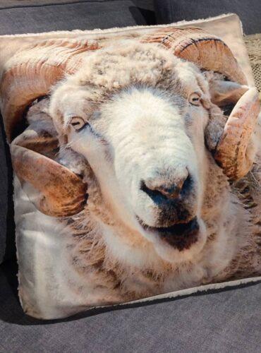 Kussen Sheep