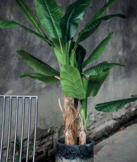 Sfeerfoto bananenplant
