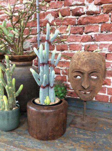 Kunst cactus - Pure Wood