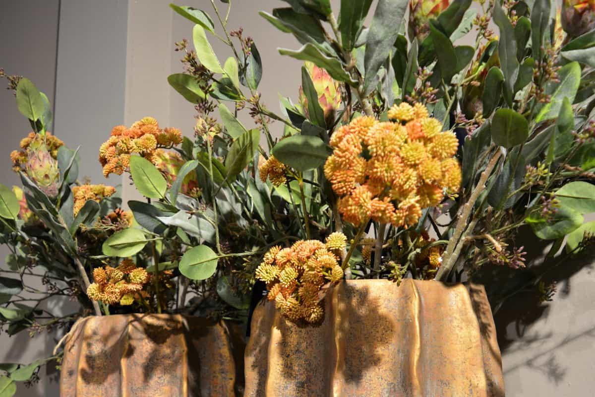 zijdebloemen - protea repens