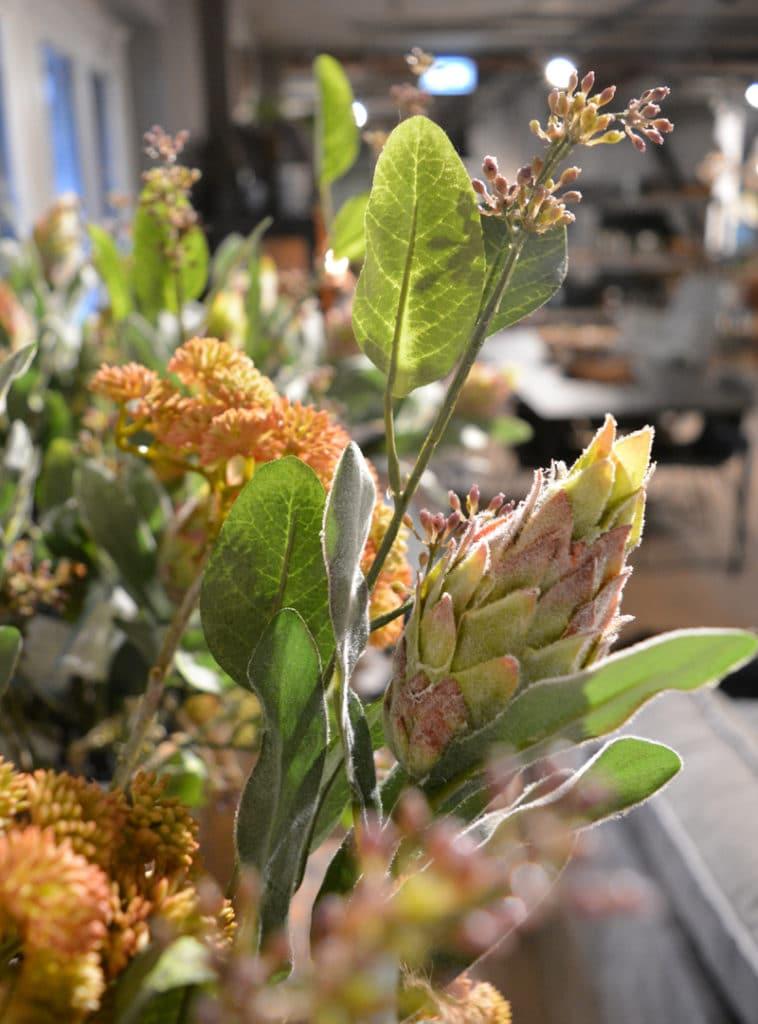 Protea-repens-758x1024