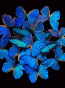 Alu art blue butterfly explosion