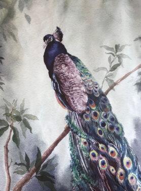 Wandkleed peacock7