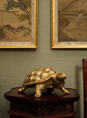 cameron schildpad groot
