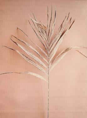 Wandkleed Dried Flower 2
