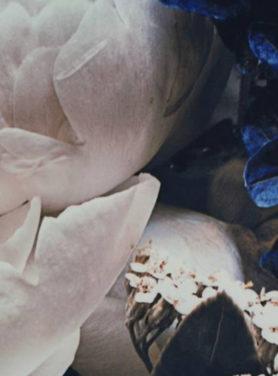 Wandkleed Peony bloemen blauw
